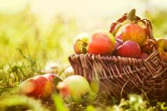 panier pommes